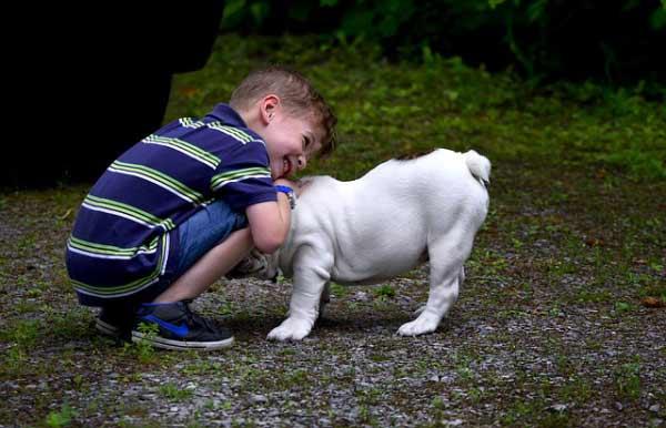 Deca i ljubimci