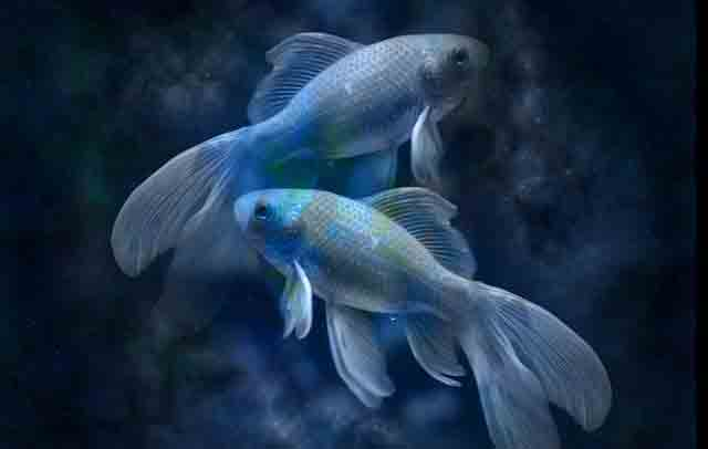 riba mesečni horoskop za maj 2015