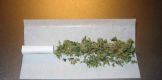 kompanija nudi posao iskusnim pušačima trave