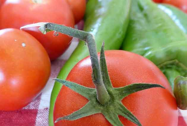 ZIMNICA OD PARADAJZA zimnica-od-paradajza---8