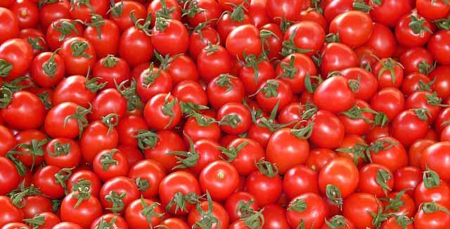 ZIMNICA OD PARADAJZA zimnica-od-paradajza---87