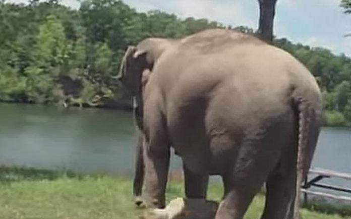 Ovaj slon je 3 nedelje čekao na istom mestu: Pogledajte koga