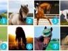 TEST KOJI PRORIČE BUDUĆNOST: Vaš izbor konja otkriva šta tražite i da li ćete to uskoro dobiti