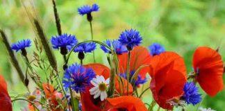 Cveće za tople letnje dane