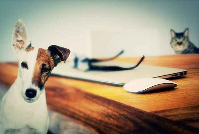 PSIHOTEST OTKRIVA VAŠE SKRIVENE ŽELJE: Zamislite mačku, pacova i psa i otkrijte šta to znači