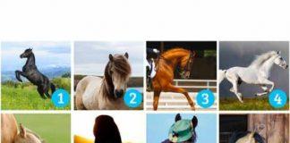 Odaberi najlepšeg konja