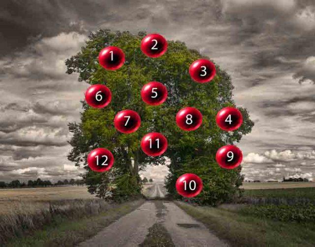 DRVO ŽELJA: Odaberite plod i saznajte da li će vam se želja ostvariti