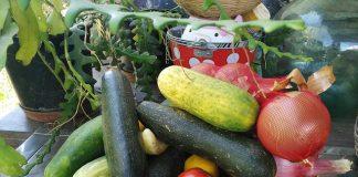 tikvice, krastavac, povrće, foto pixabay