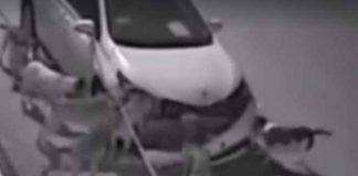 BIZARNO: Pitate se zašto psi jure kola i laju na automobile? Ovaj video će vam možda dati odgovor
