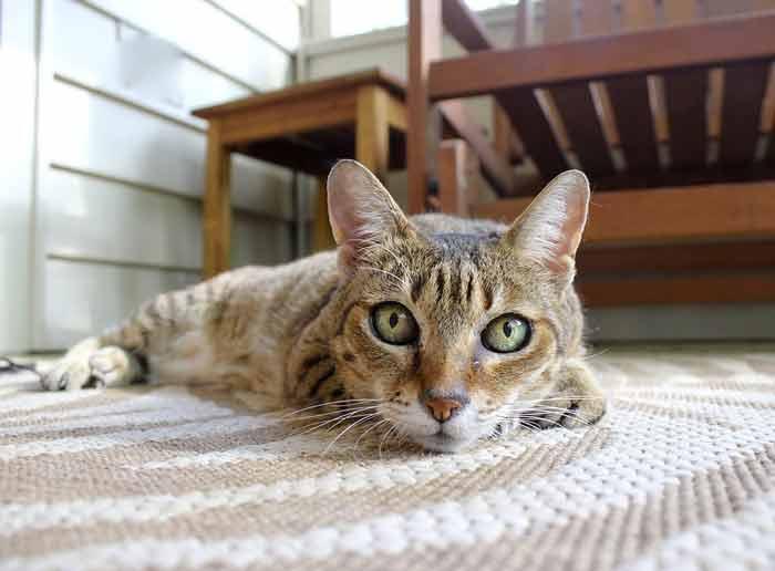 Mačke ipak više vole ljude: Od hrane i igračaka bitnije im je druženje i ljubav
