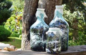 ARONIJA: Recept za lekoviti sok, džem ili slatko od aronije!