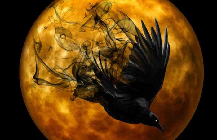 AKO ČESTO VIĐATE VRANE: Evo kakvu Vam poruku šalje vrana ako je viđate na svom prozoru!