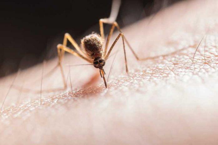 Komarci beže od ovoga ko vampiri od belog luka: Napravi prirodni preparat od ova 3 sastojka i istrebi ih zauvek