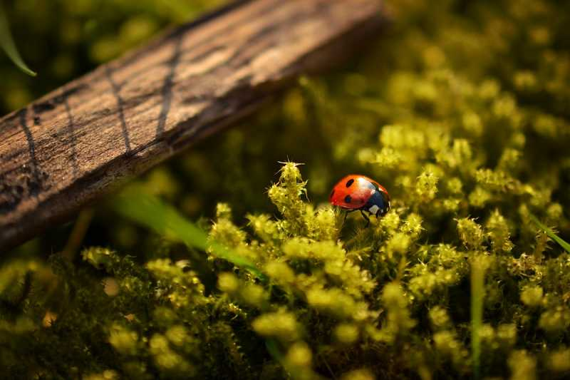 Ove životinje nose tajne poruke: Evo šta znači kad vidiš leptira, bubamaru, guštera ili zmiju