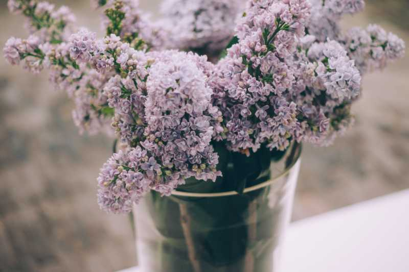 Ubijaju porodičnu sreću i uništavaju harmoniju u kući: Ako imate neku od ovih 9 biljaka, odmah ih izbacite iz svog doma