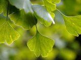 Najmoćniji prirodni antidepresivi: Ove biljke vraćaju dobro raspoloženje!