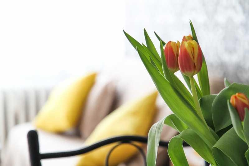 Miris starosti u stanu: Evo zašto se penzionerski zadah i kako ga se rešiti!